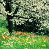 Flori De camp  4035
