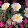 Flori De camp  4040