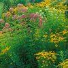 Flori De camp  4093