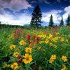Flori De camp  4110
