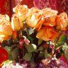 Flori Trandafiri  4363