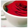 Flori Trandafiri  811
