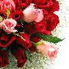 Flori Trandafiri  813