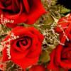 Flori Trandafiri  866