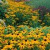 Flori Mix de flori  4189