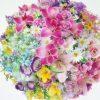 Flori Mix de flori  4191