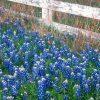Flori Mix de flori  4195
