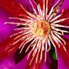 Flori Mix de flori  4202