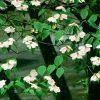Flori Mix de flori  4229