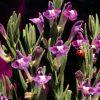 Flori Mix de flori  4232