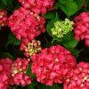 Flori Mix de flori  4255
