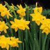 Flori Mix de flori  4259