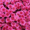 Flori Mix de flori  4268