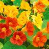 Flori Mix de flori  4273