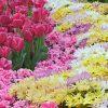 Flori Mix de flori  4275