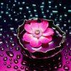 Flori Mix de flori  4289