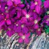 Flori Mix de flori  4293