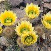 Flori Mix de flori  4299