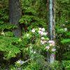 Flori Mix de flori  4301