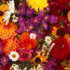 Flori Mix de flori  4304