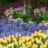 Flori Mix de flori  4309