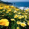 Flori Mix de flori Flori de mac 4340