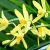 Flori Orhidee  4310