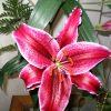 Flori Orhidee  4314