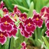 Flori Orhidee  4322