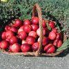Fructe Diverse Mere 6411