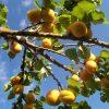 Fructe Diverse Caise 6510