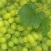 Fructe Diverse Sruguri 6512