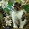 Animale Pisici  112