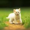 Animale Pisici  129