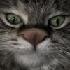 Animale Pisici 131