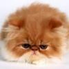 Animale Pisici  135