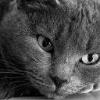 Animale Pisici  142