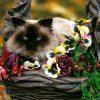 Animale Pisici  1489