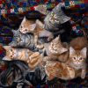 Animale Pisici  1505