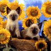 Animale Pisici  1551