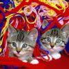Animale Pisici  1569