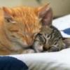 Animale Pisici  192