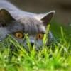 Animale Pisici  194