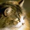 Animale Pisici  209