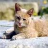 Animale Pisici  213