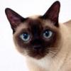Animale Pisici  221