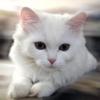 Animale Pisici  228