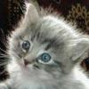 Animale Pisici  231