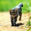 Animale Pisici  246