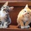 Animale Pisici  249
